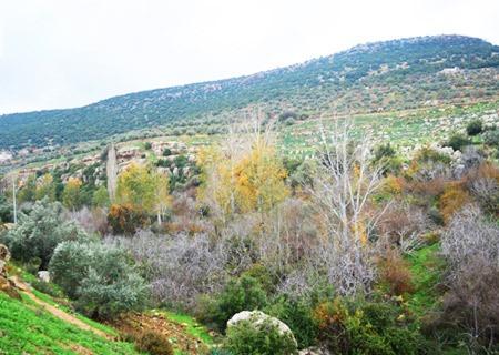Ajloun-Greenery