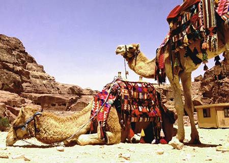 Wadi-Rum-Camels