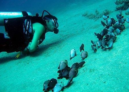 Diving-Aqaba