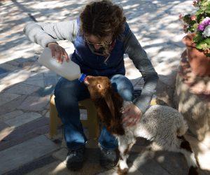 Farmer experience goat