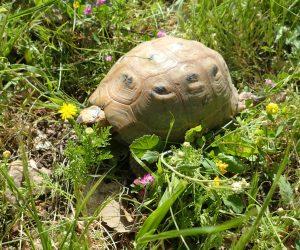 Turtle Ajloun
